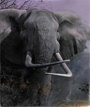 Oil painting of an African Bull Elephant with cross tusks