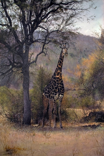 'In the Shade' South African Giraffe.  Oil on canvas 16 x 24 ins