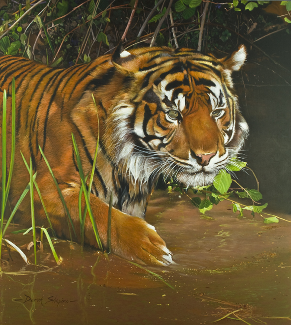 Wildlife oil painting of a stalking Tiger coming out of the undergrowth into the edge of water