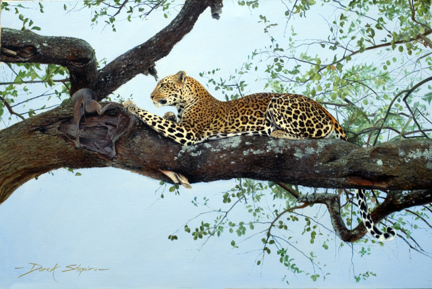 ' Lunch Break ' BIG FIVE COLLECTION Oil on canvas 24 x 36 ins, a painting of a Leopard on the bow of a tree