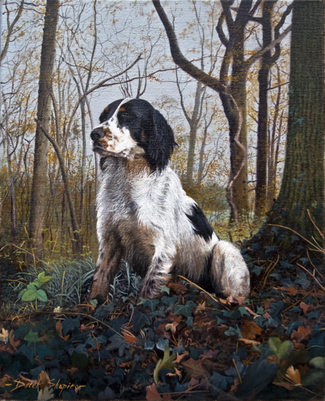 An oil painting portrait on canvas of a working English Springer Spaniel dog waiting for the off during a Spaniel field trial