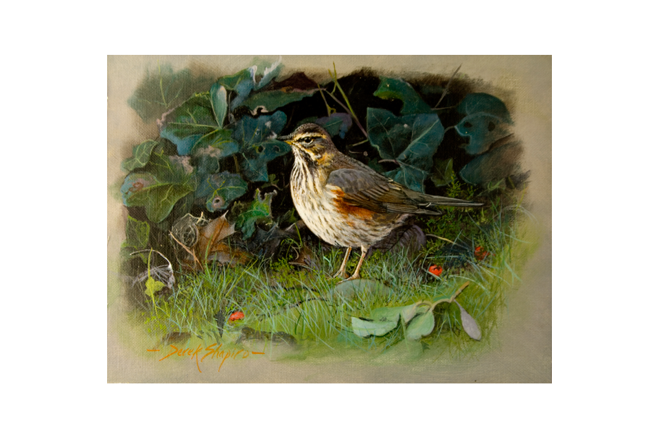 An oil on panel painting of a bird called the Redwing. The Redwing is a common winter visitor and of the Thrush family.