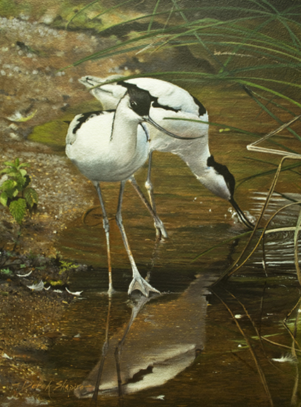 'The Avocet' Oil on panel 16 x 12 ins