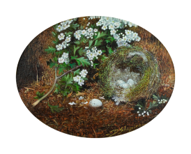 'Birds Nest with Hawthorne'1 Oil on canvas , an oil painting of a birds nest with Chaffinch eggs on a natural ground and a mossy bank with a spray of Hawthorne blossom