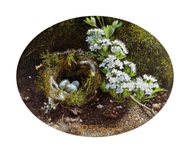 'Birds Nest with Hawthorne' 2 Oil on canvas , an oil painting of a birds nest with Chaffinch eggs on a natural ground and a mossy bank with a spray of Hawthorne blossom