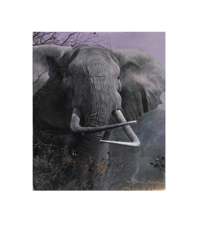 Limited Edition Artist signed print from the original oil painting of an African Bull Elephant with cross tusks