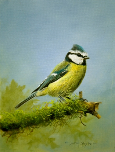 'The Blue Tit'  Oil on panel 8 x 6 ins