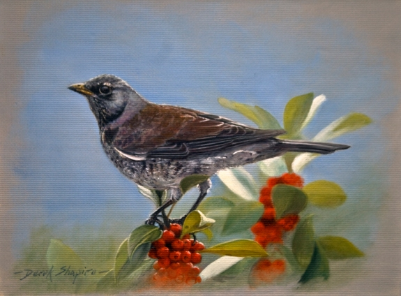 'The Fieldfare' turdus pilaris Oil on panel 6 x 8 ins