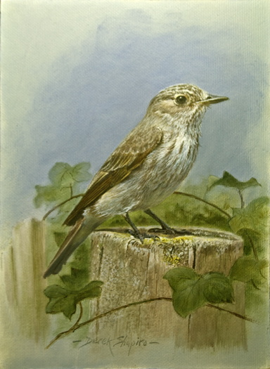 Spotted Flycatcher (Muscicapa Striata) Oil on panel 8 x 6 ins