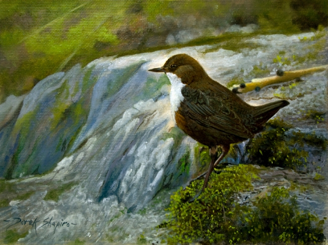 'The Dipper'.Cinclus Aqauticus Oil on panel 6 x      8 ins