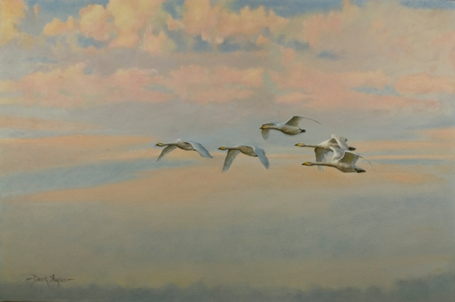 Oil painting on canvas of Whooper Swans flying high on migration to their wintering sites in Southern Europe and Eastern Asia