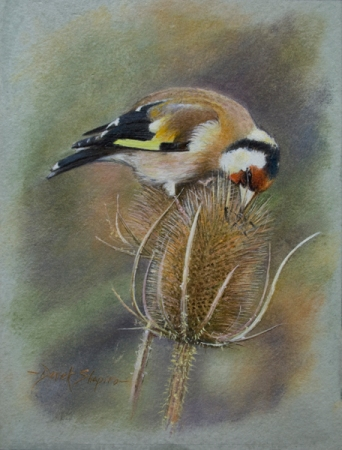 Oil painting study of a Goldfinch bird feeding on Teasel