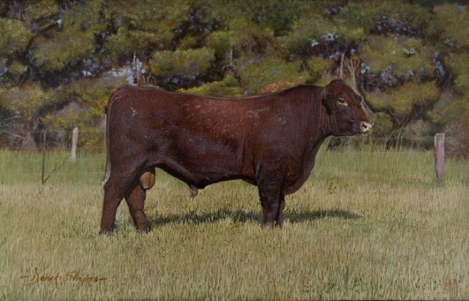 An oil painting of a Red Poll Bull grazing in pasture land