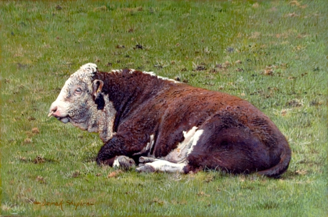 An oil portrait painting of an polarded Hereford Bull lying down in a field resting