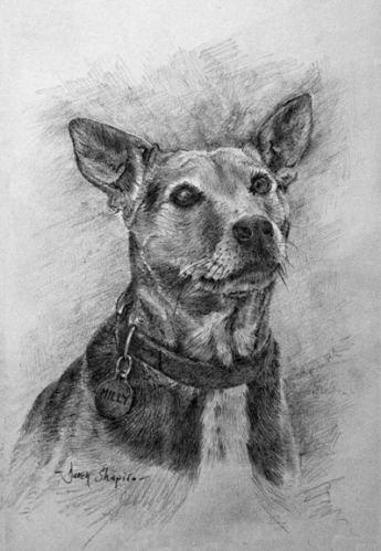 Portrait study in pencil of a cross bred dog called Millie